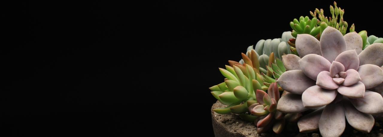 Bennett Plants - bennettplants com